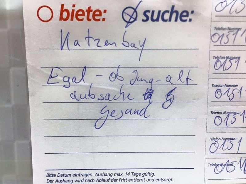 Katzenbaby Gesucht Berlin Notes Of Berlin Berlin Lustige Spruche