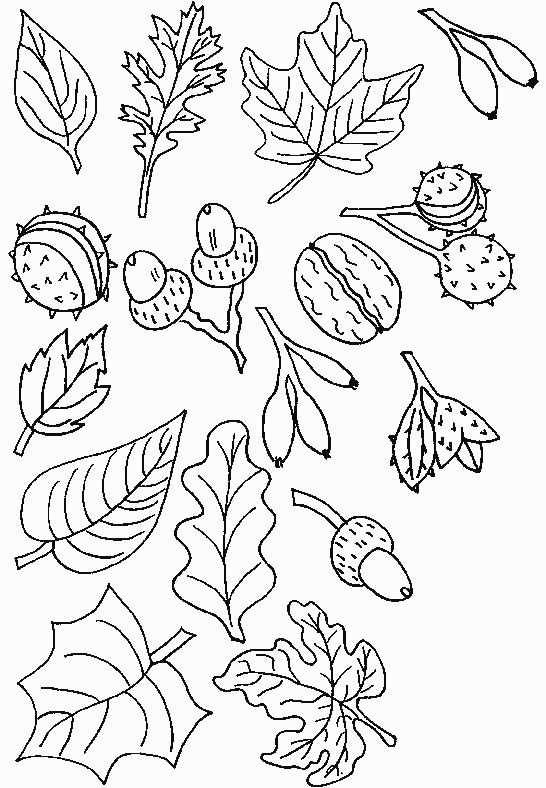 Malvorlage Herbst Malvorlagen Herbst Ausmalbilder Herbst