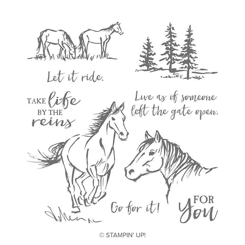 Gutschein Fur Reitstunden Pferde Pferdekarten Pferde Pferd