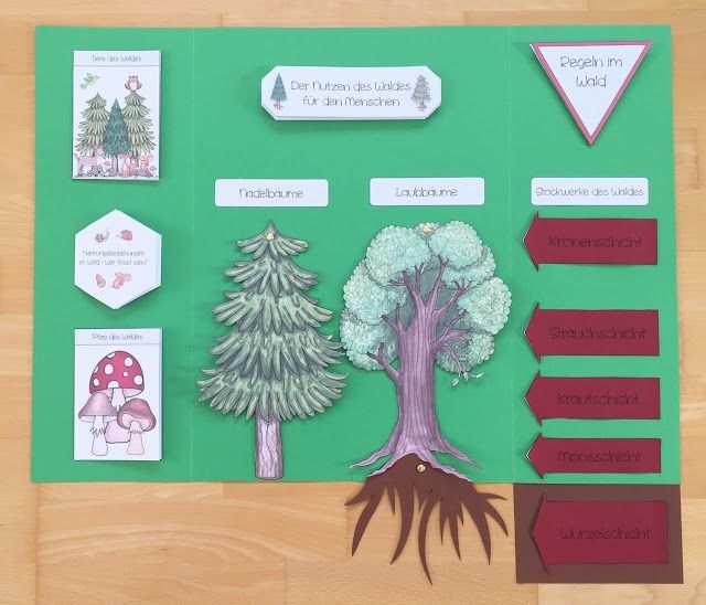 Wald Lapbook Im Sachunterricht Materialwiese Wald Grundschule