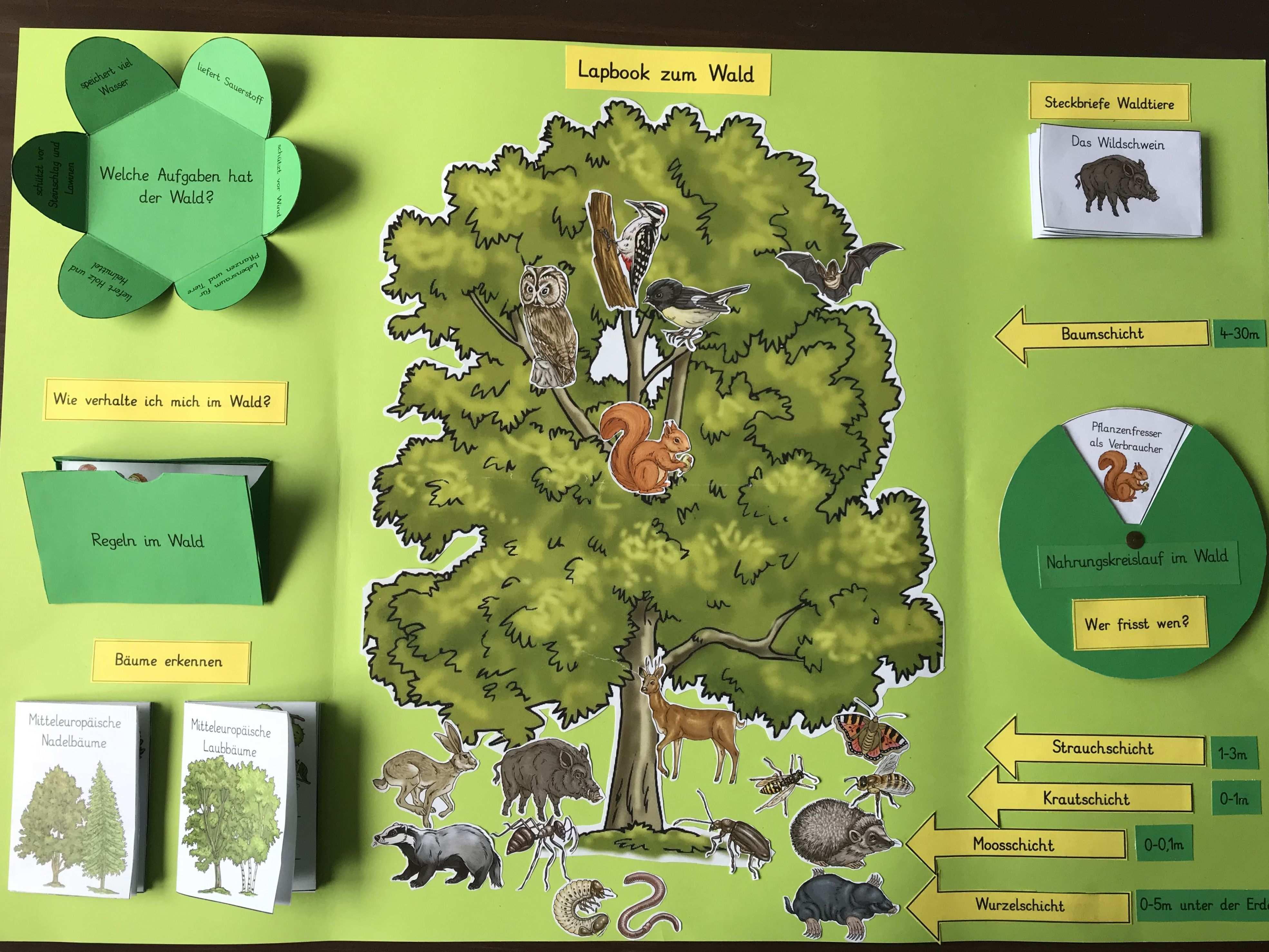 Lapbook Zum Thema Wald Mit Lapbook Vorlage Wald Grundschule