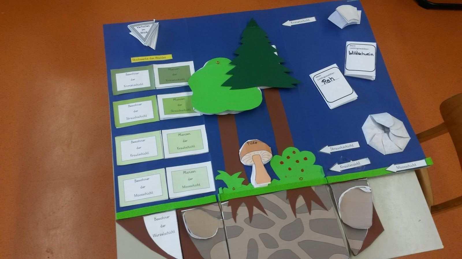 Lapbook Lebensraum Wald Meine Umsetzung Wald Grundschule