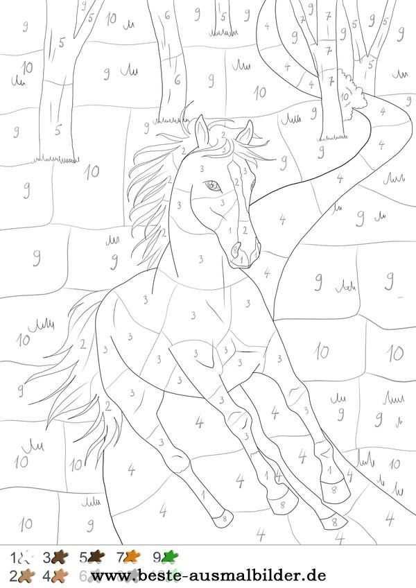 Pferd Im Wald Malen Nach Zahlen Pintura Por Numeros Dibujos