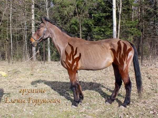 Clip Clipping Horses Pferde Frisuren Pferd Scheren Schone Pferde