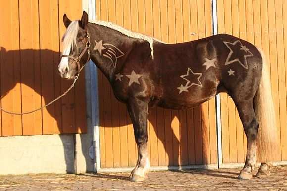 Pferdefrisuren Die Schonsten Motive Pferde Frisuren