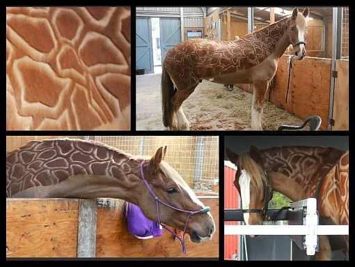 Pferdefrisuren Die Schonsten Motive Pferde Frisuren Pferd