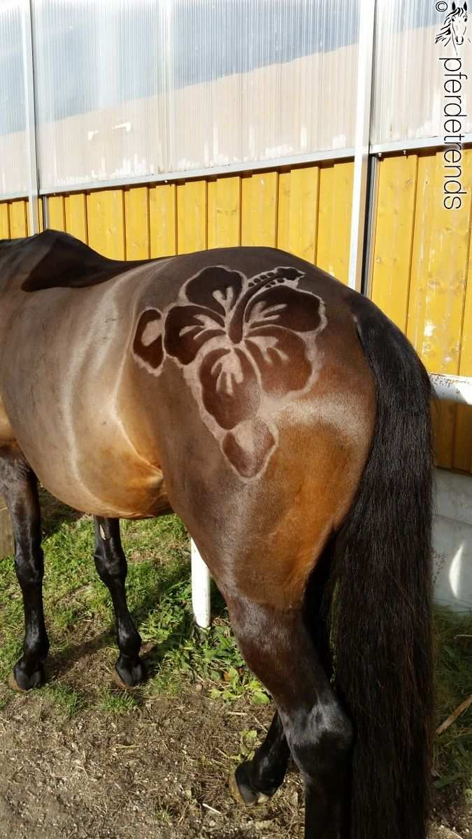 Pin By Anja Oelerich On Clipping Equine Horse Pony Donkey Foal