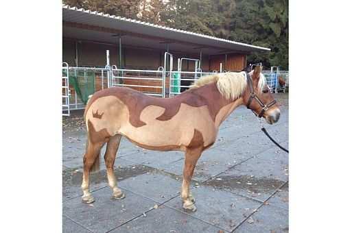 Pferdefrisuren Die Schonsten Motive In 2020 Pferd Pferd