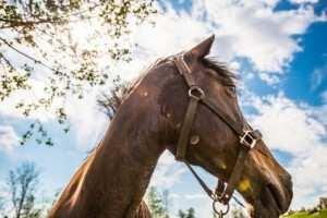 Schutzvertrag Pferd Pferdeschutzvertrag Downloaden
