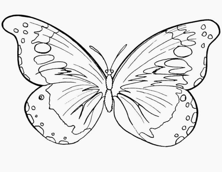 Beste Von Inspiration Vorlage Schmetterling Fur Kinder Kostenlos
