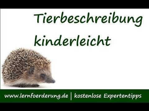 Tierbeschreibung Schritt Fur Schritt Anleitung Youtube